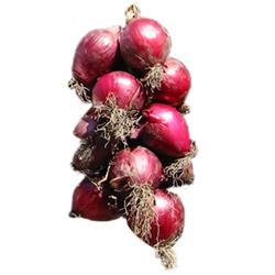 Cipolla rossa di tropea for Coltivare cipolle